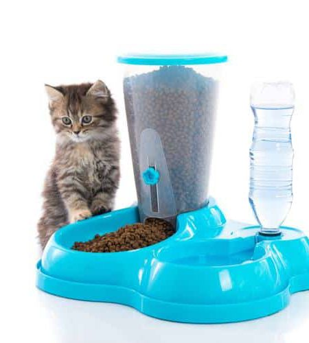 Pet Feeding bowls and feeders