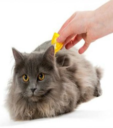 Pet Anti-Tick and Flea Products